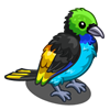 Yellow Tipped Tanager-icon