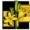 Daylily-icon