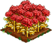Red Chrysanthemum extra100