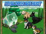 Sporty Doghouse