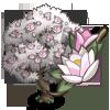 Magnolia Tree (tree)-icon