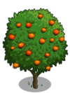 Blood Orange Tree2-icon