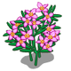 Boronia-icon