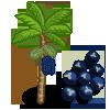 Acai Tree-icon.png