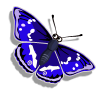 Collect purpleemperorbutterfly