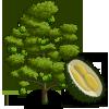 DurianTree-icon