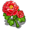 Red Charm Peony-icon