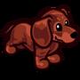 Dachshund Puppy Red-icon