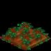 Poinsettia 66