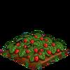 Strawberries-bloom