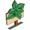 Peppermint Mastery Sign-icon