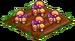 Pixie Mushrooms 66