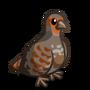 English Partridge-icon