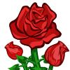 Red Rose-icon