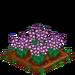Gladiolus 100