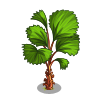 Licuala Palm Tree-icon
