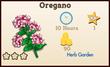Oregano Market Info