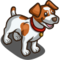 Jack Russel Terrier-icon