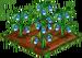 Blue Bean 66