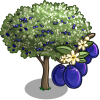 Damson Tree-icon
