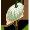 White Pumpkin Mastery Sign-icon