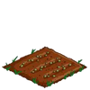 Artichokes-seed