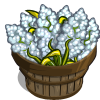 White Sorghum Bushel-icon