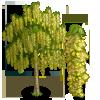 Goldenchain Tree-icon