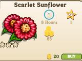 Scarlet Sunflower
