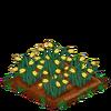 Daffodils-66
