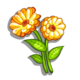Orange Calendula-icon