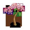 Dwarf Orchid Tree-icon