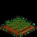 Field Bean 33
