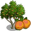 ApricotTree-icon