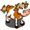 Chrysanths Cow-icon