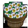 White Hibiscus Bushel-icon