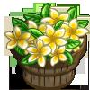 Evergreen Frangipani Bushel-icon