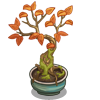 Barberry Bonsai Tree-icon