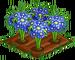 Blue Daisy 100