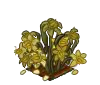 Daffodils-wiltedbunch