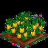 BellPeppers-bloom