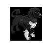 Portuguese Water Dog-icon