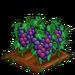 Super Grape 100