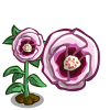 Desert Rose Single Bloom-icon