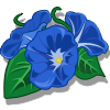 Arquivo:Morning Glory-icon.png