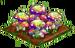 Pixie Mushrooms 100