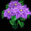 Purple Poinsettia-icon