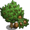 Hazelnut Tree-icon