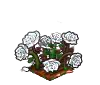Wither Bunch White Roses-icon