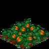 AcornSquash-super